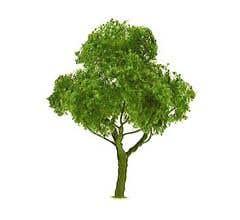 "JTT #94300 Deciduous Tree 3"" (2 per pack)"
