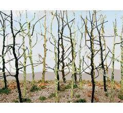 JTT #32509 Wood's Edge Trees - Bare (14 pcs)