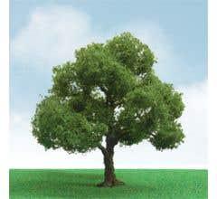 "JTT #92304 Elder Pro-Elite Trees - 3"" - 3.5"" (2 per package)"