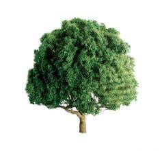 "JTT #94264 Oak Trees 3"" (2 per pack)"