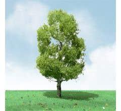 """JTT #92309 Birch Pro-Elite Trees - 3.5"""" - 4"""" (2 per package)"""