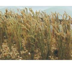 """JTT #32508 Wheat - 1"""" Tall (40 pcs)"""