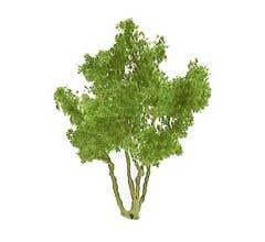 """JTT #94255 Snow Gum Trees - 1-1/2"""" Tall (4 per pack)"""