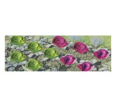 """JTT #95527 Cabbages & Lettuces 1/4"""" Tall HO Scale, 20/pk"""
