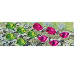 """JTT #95528 Cabbages & Lettuces 1/2"""" Tall O Scale, 20/pk"""